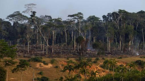 América Latina es la región que menos reforesta sus bosques