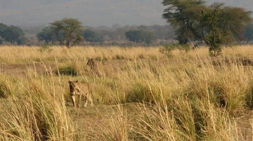 Seis miembros de WWF fueron secuestrados en la India