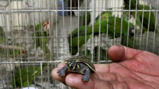 Bangkok, la capital del tráfico de animales en peligro de extinción
