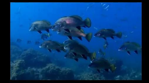 El Mediterráneo que nos mostró Jacques Cousteau ya es historia