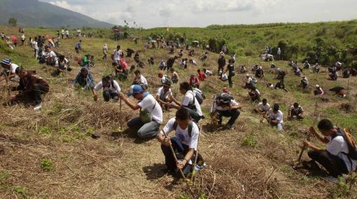 Récord mundial: en Filipinas plantaron 64.000 árboles en 15 minutos
