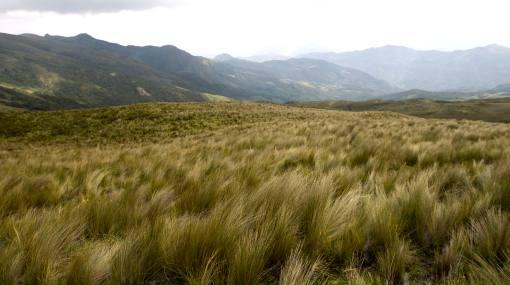 Urge proteger los páramos andinos de Piura
