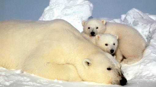 Sexta gran extinción de especies ya se inició, según científicos