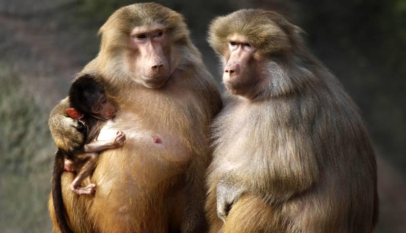 FOTOS: tiernas muestras de cariño en el mundo animal