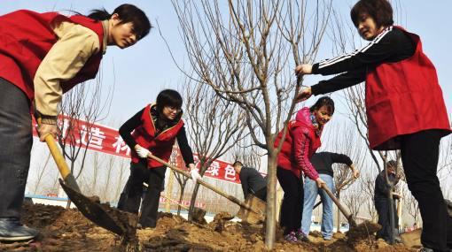 Campaña ecológica: en Beijing plantarán 4 millones de árboles este año