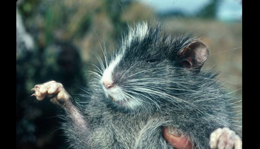 FOTOS: animales descubiertos en los últimos 20 años