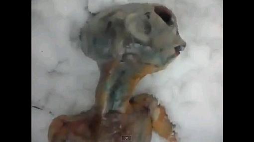 VIDEO: un supuesto extraterrestre muerto fue encontrado en Rusia