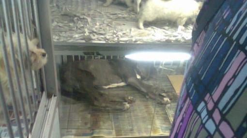 Maltrato animal: perro permanece en una pequeña vitrina del Centro de Lima