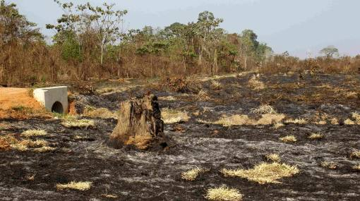 Hasta 230 millones de hectáreas de bosques desaparecerían el 2050 por la deforestación