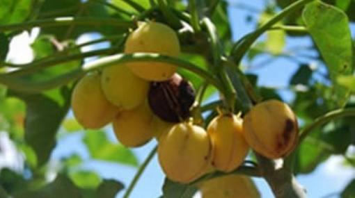 San Martín: siembran plantas que recuperan suelos dañados por deforestación