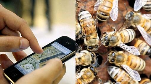 Celulares afectan el comportamiento de las abejas, según estudio