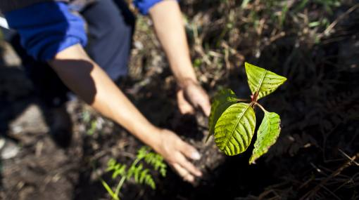 Siembran 222 millones de árboles en campaña nacional de reforestación