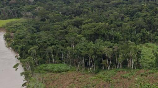 Realizarán inventario nacional forestal