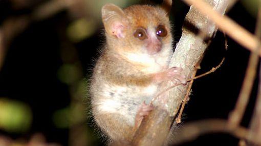 Deforestación en Madagascar amenaza a especies únicas en el mundo