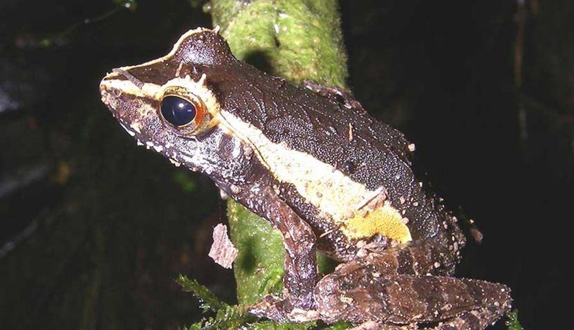 FOTOS: conozca a las especies amenazadas de Madagascar