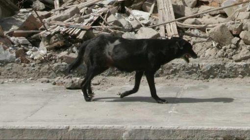 """Perro es condenado a morir lapidado por ser """"reencarnación de un abogado"""""""