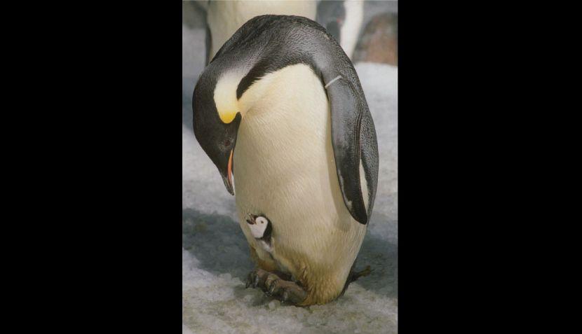 FOTOS: los animales demuestran su ternura en el Día del Padre