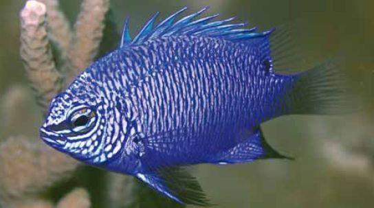 Más de 1.000 especies fueron descubiertas en Nueva Guinea en últimos años