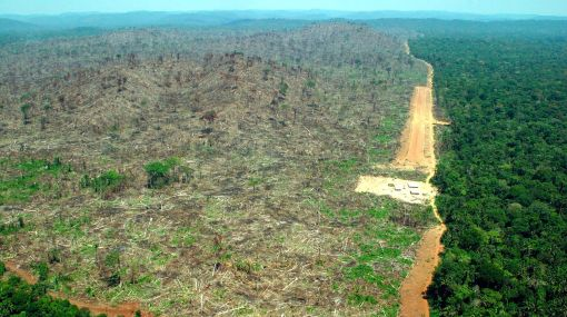 La mitad de la Amazonía podría desaparecer el 2050