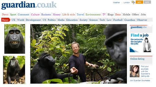 Insólito: monos roban cámara y se toman fotos a sí mismos