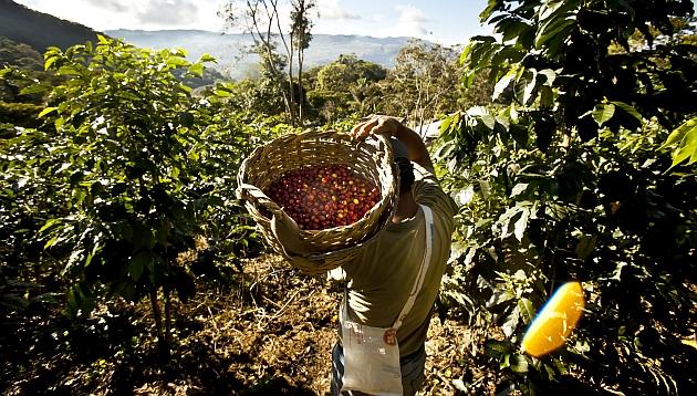Con aroma a café: un recorrido por los cafetales de Villa Rica