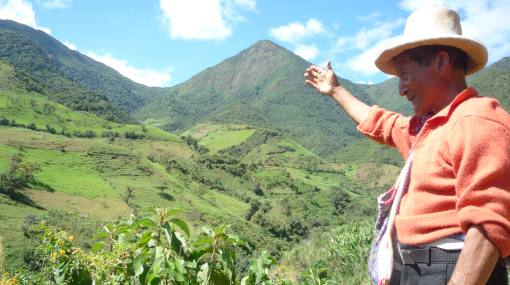 Bosque de Cuyas en Piura está amenazado
