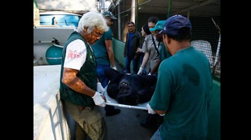 Brasil: intervienen zoológico por tráfico de animales en peligro de extinción
