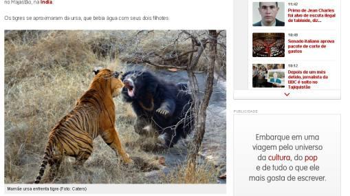 Osa se enfrentó a tigre para proteger a sus cachorros