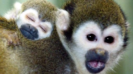 Descubren más de 200 especies en región asiática del Gran Mekong