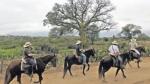 Unos 30 caballos de paso recorren la ruta que hizo Francisco Pizarro - Noticias de don lino