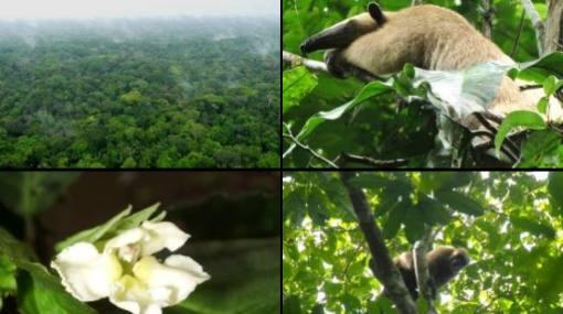 La Zona Reservada Yaguas fue declarada área natural protegida