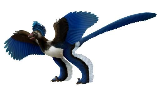 El arqueoptérix, ¿ave o dinosaurio?
