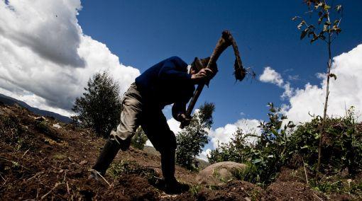 Ministerio de Agricultura y la FAO impulsarán consumo de productos andinos
