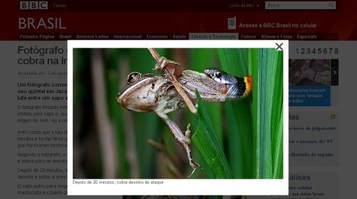 Impresionantes imágenes de la feroz pelea entre un sapo y una serpiente