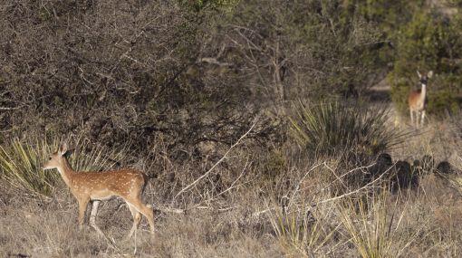 Peor sequía en la historia de Texas dejará graves daños en los ecosistemas