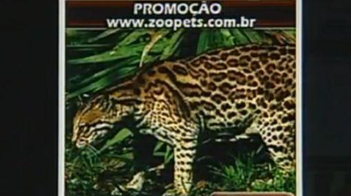 Brasil: rescatan más de 2.500 animales en operación contra tráfico de fauna