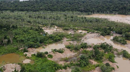 Madre de Dios: reforestarán áreas devastadas por minería informal de oro