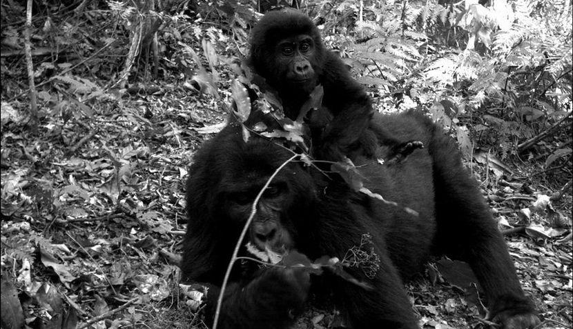 FOTOS: la vida animal sin la presencia amenazante del hombre
