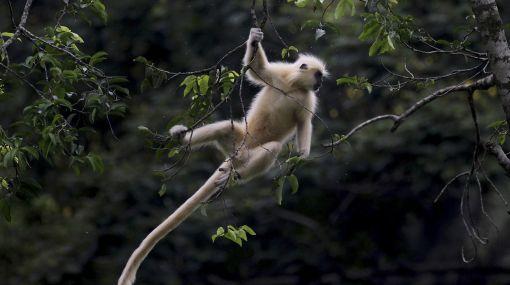 Las uñas aparecieron hace 55 millones de años en los primates pequeños