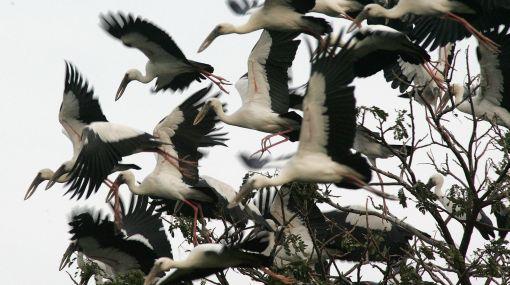 Cambio climático hace que fauna varíe de hábitat rápidamente