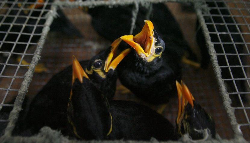 FOTOS: un nuevo golpe a la mafia mundial de tráfico de animales