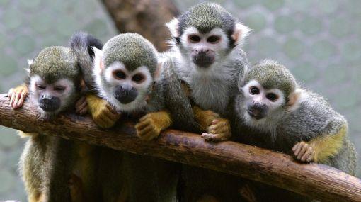 Washington: animales de zoológico sintieron el sismo segundos antes
