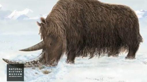 Hallan restos de rinoceronte lanudo de hace 3,6 millones de años