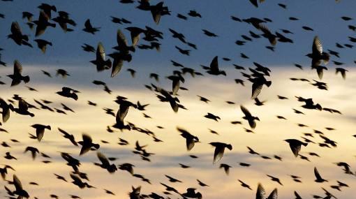 La mejor foto de aves peruanas silvestres será premiada en concurso