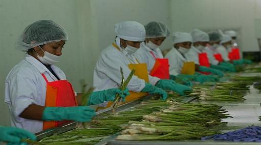 Al 2012 los envíos de orgánicos superarán los US$320 millones