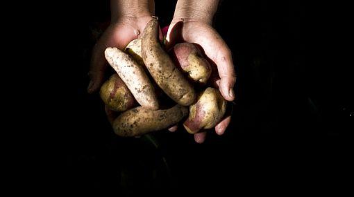 Cambio climático afectaría la producción de papas y yucas