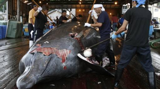 Nueva Zelanda condena reanudación de caza de ballenas en Japón