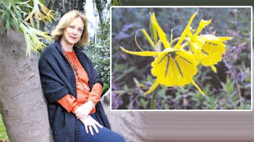 Limeños de todas las cepas: la mujer que salvó la flor de amancay