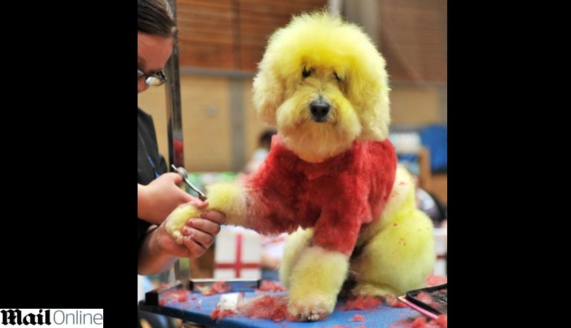 FOTOS: realizan primera competencia de estilistas de perros en Inglaterra