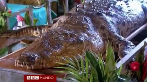 El cocodrilo 'Pocho' fue despedido con funeral en Costa Rica